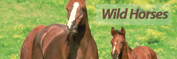 Bulk Wild Horse Party Supplies