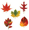 MINI LEAF CUTOUTS(240/CS) PARTY SUPPLIES