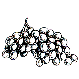 DISCONTINUED GRAPES RUBBER STAMP PARTY SUPPLIES