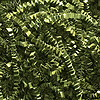 OLIVE GREEN CRINKLE CUT™ PAPER-10LB. PARTY SUPPLIES